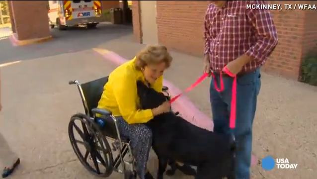 labrador-with-owner-in-wheel-chair