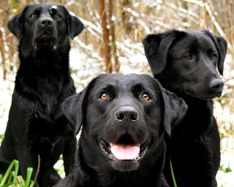 Enough With Countless Poems on Loss and Death of Pet Dogs Where are the Written Happy Poems