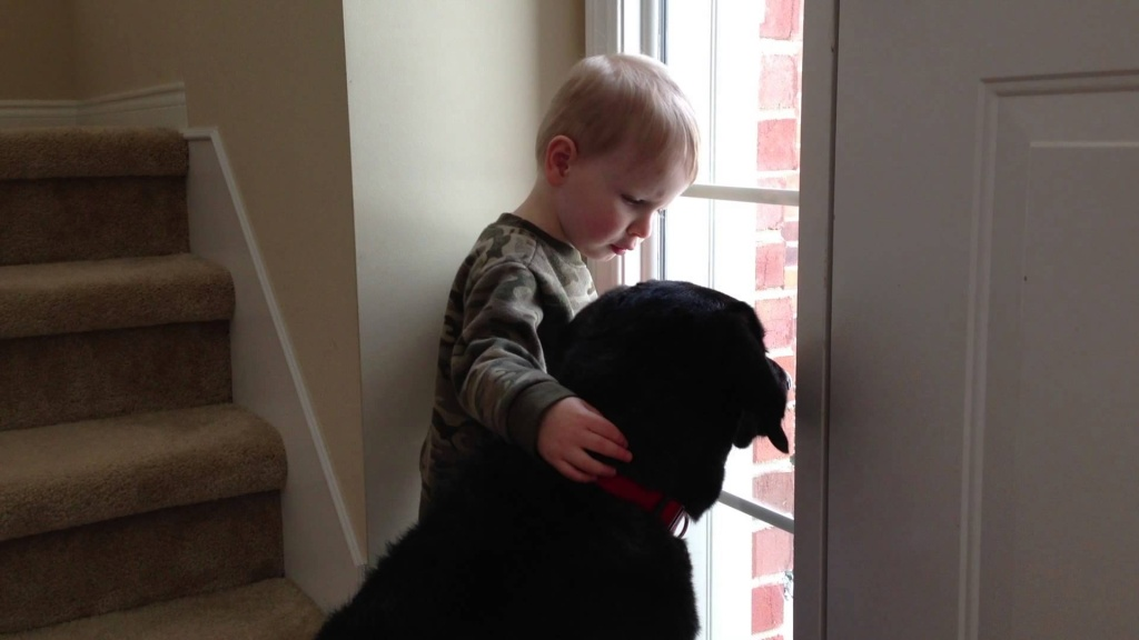 21 Seldom Known Facts About Labrador Retrievers, The Dog All Children Love