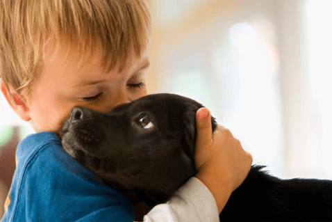 black-labrador-puppy-being-hugged-by=small-boy