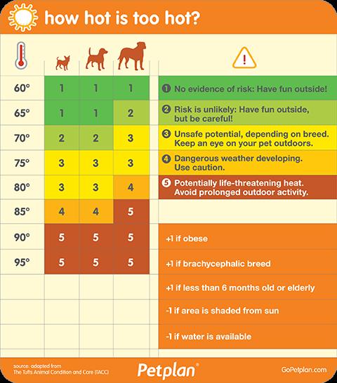 Dog Dehydration Signs, 5 Warning Signs of Dog Dehydration